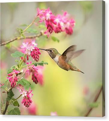 Hummingbird Heaven 2 Canvas Print by Angie Vogel