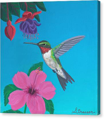Hummingbird Heaven Canvas Print by Frank Strasser