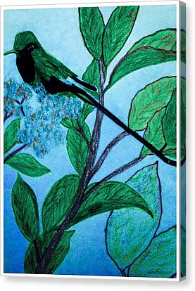 Hummingbird In Evening Canvas Print by Debra Lynch