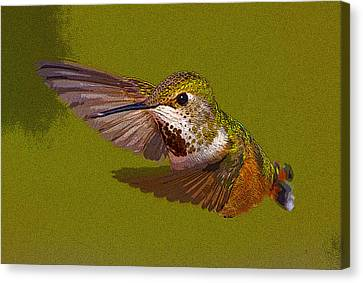 Hummingbird In Flight- Abstract Canvas Print by Tim Grams