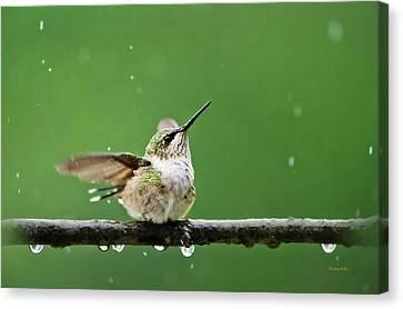 Hummingbird In The Rain Canvas Print by Christina Rollo