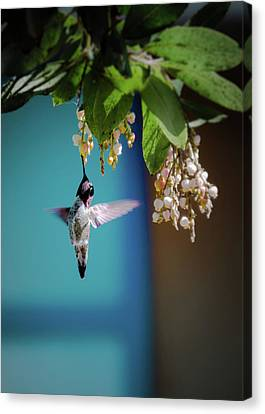 Hummingbird Moment Canvas Print by Mark Dunton