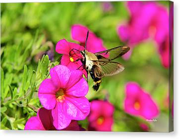Canvas Print featuring the photograph Hummingbird Moth by Christina Rollo