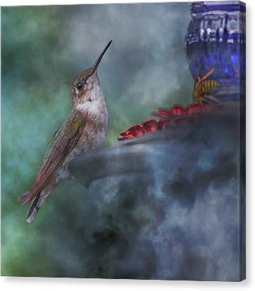 Foggy Day Canvas Print - Hummingbird Mystic Mist by Betsy Knapp