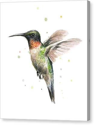 Hummingbird Canvas Print by Olga Shvartsur