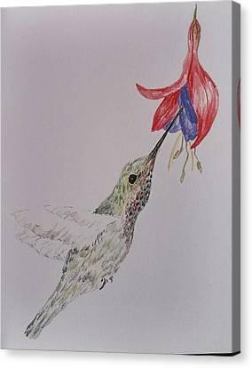 Hummingbird On Fushia Canvas Print by Sally Atchinson