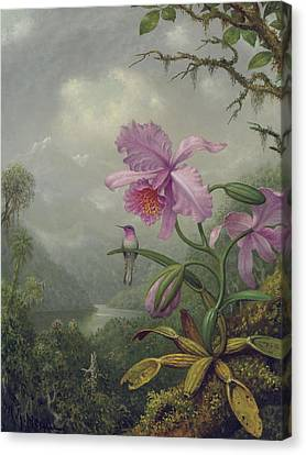 Pink Flower Branch Canvas Print - Hummingbird Perched On An Orchid Plant by Martin Johnson Heade