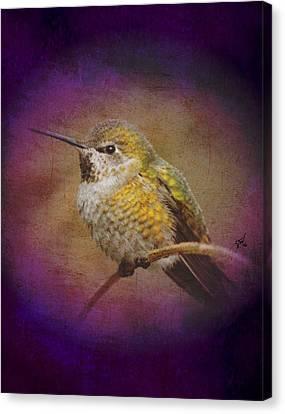 Canvas Print featuring the digital art Hummingbird Rufous by John Wills