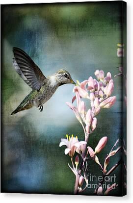Hummingbird  Canvas Print by Saija  Lehtonen
