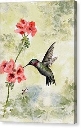 Hummingbird Canvas Print by Sam Sidders