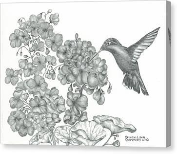 Hummingbird  Canvas Print by Sharon Blanchard