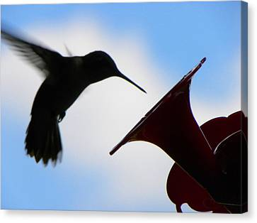 Canvas Print featuring the photograph Hummingbird Silhouette by Sandi OReilly
