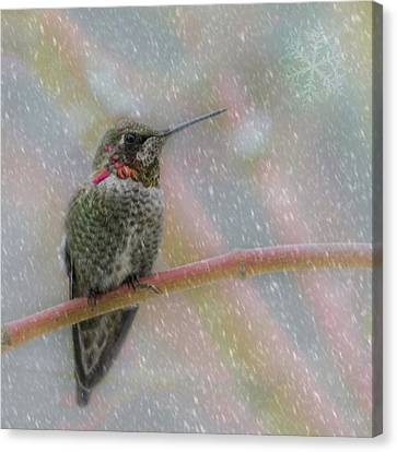 Canvas Print featuring the photograph Hummingbird Snowfall by Angie Vogel