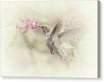 Canvas Print featuring the photograph Hummingbird Softly by Angie Vogel