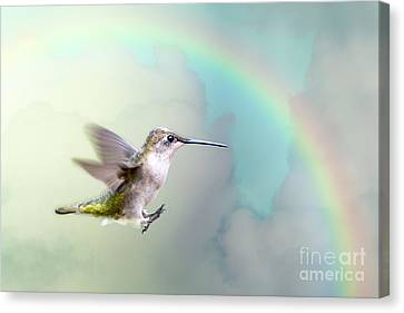 Hummingbird Under Rainbow Canvas Print by Bonnie Barry