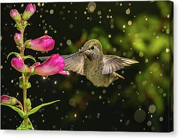 Canvas Print featuring the photograph Hummingbird Visits Flowers In Raining Day by William Lee