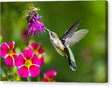 Canvas Print featuring the photograph Hummingbird With Flower by Christina Rollo