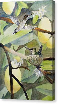 Hummingbirds And Lemons Canvas Print