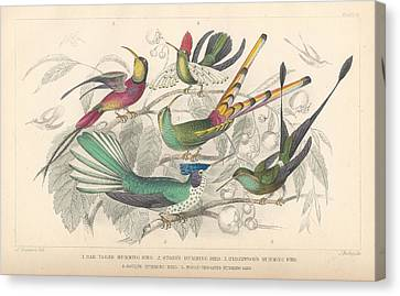 Hummingbird Canvas Print - Hummingbirds by Dreyer Wildlife Print Collections
