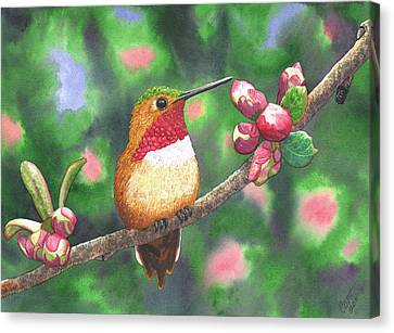 Hummy Canvas Print by Catherine G McElroy
