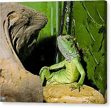 Humorous Pet Iguana Photo Canvas Print by Carol F Austin