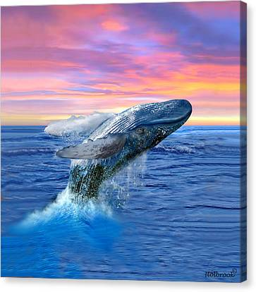 Humpback Whale Breaching At Sunset Canvas Print by Glenn Holbrook