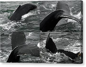 Humpback Whale Fluke Montage Canvas Print by Robert Shard