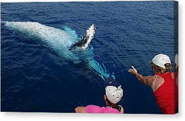 Canvas Print featuring the photograph Humpback Whale Reaching Out by Gary Crockett