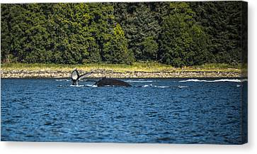 Humpback Whale Canvas Print by Robin Williams