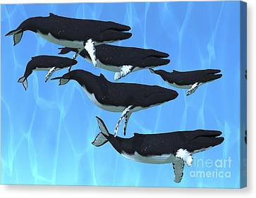 Humpback Whales Swim Together Canvas Print