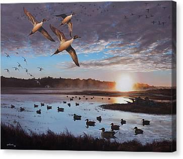 Humphrey Farm Pintails Canvas Print