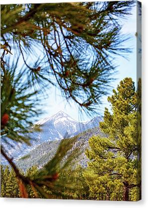 Humphreys Mountain Peak Between Pine Trees Canvas Print by Susan Schmitz