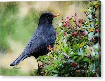 Hungry Blackbird Canvas Print