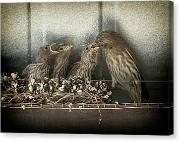 Hungry Chicks Canvas Print by Alan Toepfer