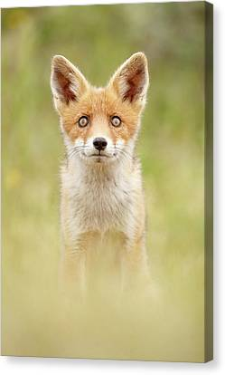 Hungry Eyes _cute Red Fox Cub Canvas Print by Roeselien Raimond