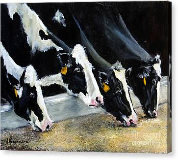 Hungry Holsteins Canvas Print