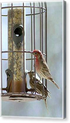 Canvas Print featuring the digital art Hungry House Finches by Ellen Barron O'Reilly