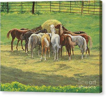 Hungry Yearlings At Big Creek Canvas Print by Don Langeneckert