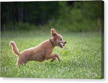 Hunting Dog Canvas Print