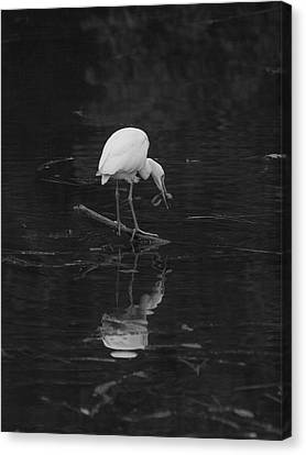 Hunting Egret Canvas Print by Joshua House
