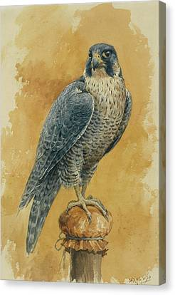 Hunting Bird Canvas Print - Hunting Falcon by Alexander Sergeevich Khrenov