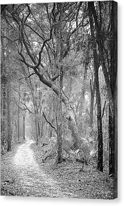 Hunting Island Path  Canvas Print by Phill Doherty