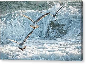 Hunting The Waves Canvas Print by Don Durfee