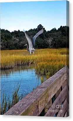 Huntington Beach Heron II Canvas Print