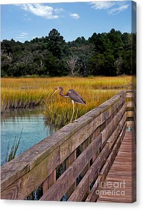 Huntington Beach Heron Canvas Print