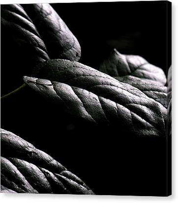 Hushed Canvas Print by Bonnie Bruno