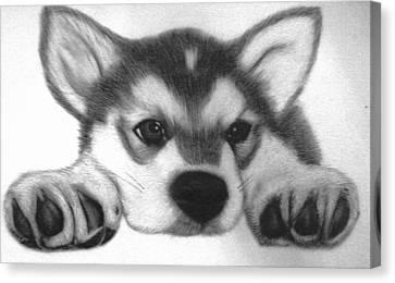 Huskie Pup Canvas Print by Susan Barwell