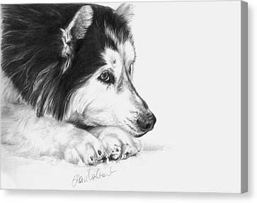 Husky Contemplation Canvas Print by Sheona Hamilton-Grant