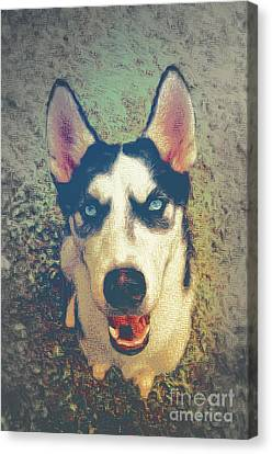 Husky Modern Canvas Print by Angela Doelling AD DESIGN Photo and PhotoArt