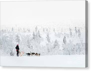 Canvas Print featuring the photograph Husky Safari by Delphimages Photo Creations